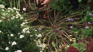 Sedum spectabile: cuidados y arreglo floral