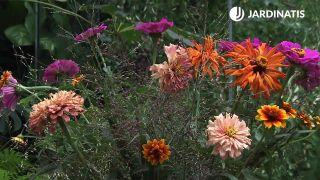 Características y arreglo floral con zinnias o flor de papel