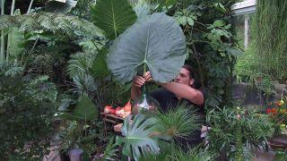 Arreglos florales con plantas de hojas grandes