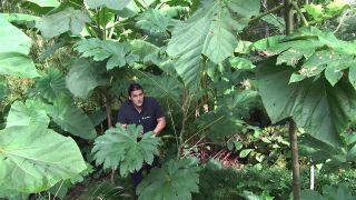 Jardín temático Lurgarden de plantas de hojas grandes