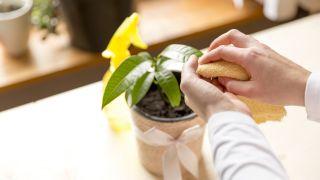 Limpiar plantas de interior