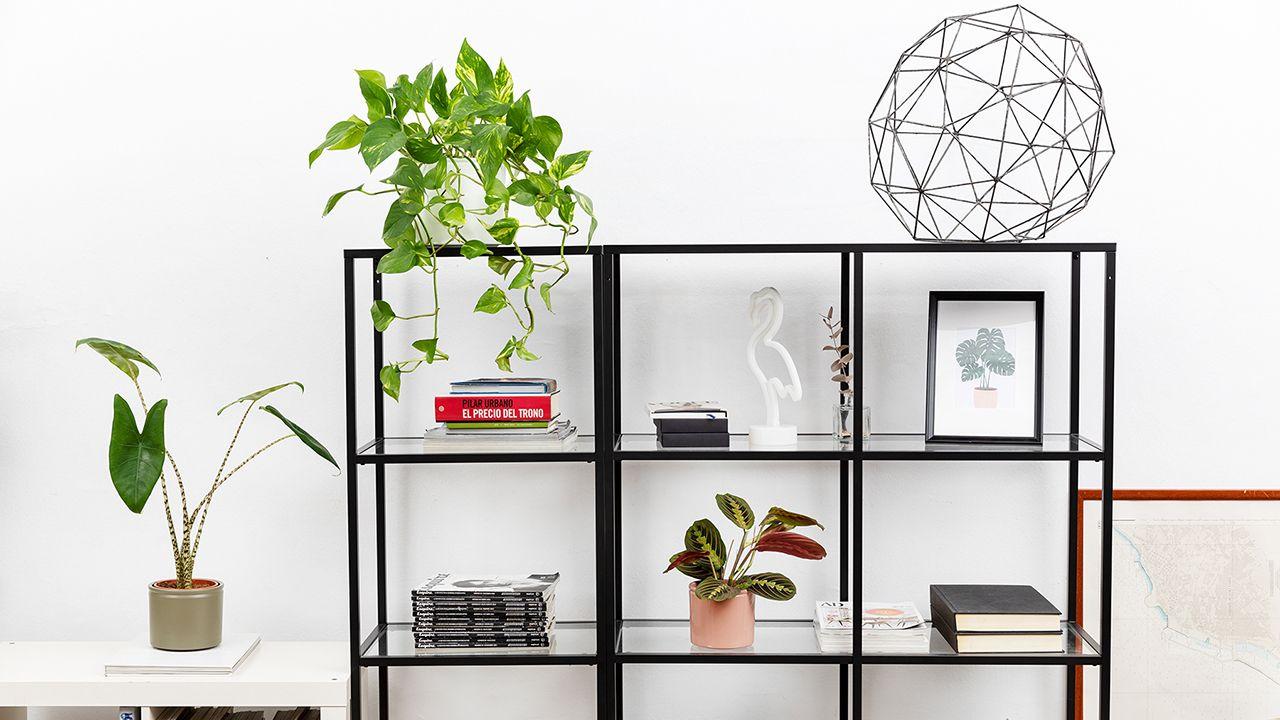 6 beneficios de tener plantas en casa