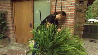 Proteger plantas del frío - Paso 1