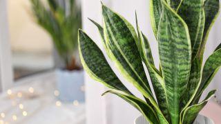 Plantas de interior retro