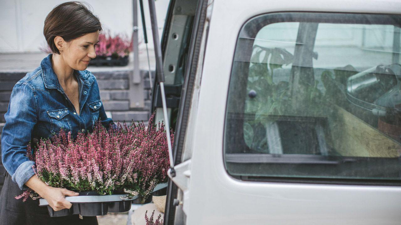 El trasporte de las plantas de interior