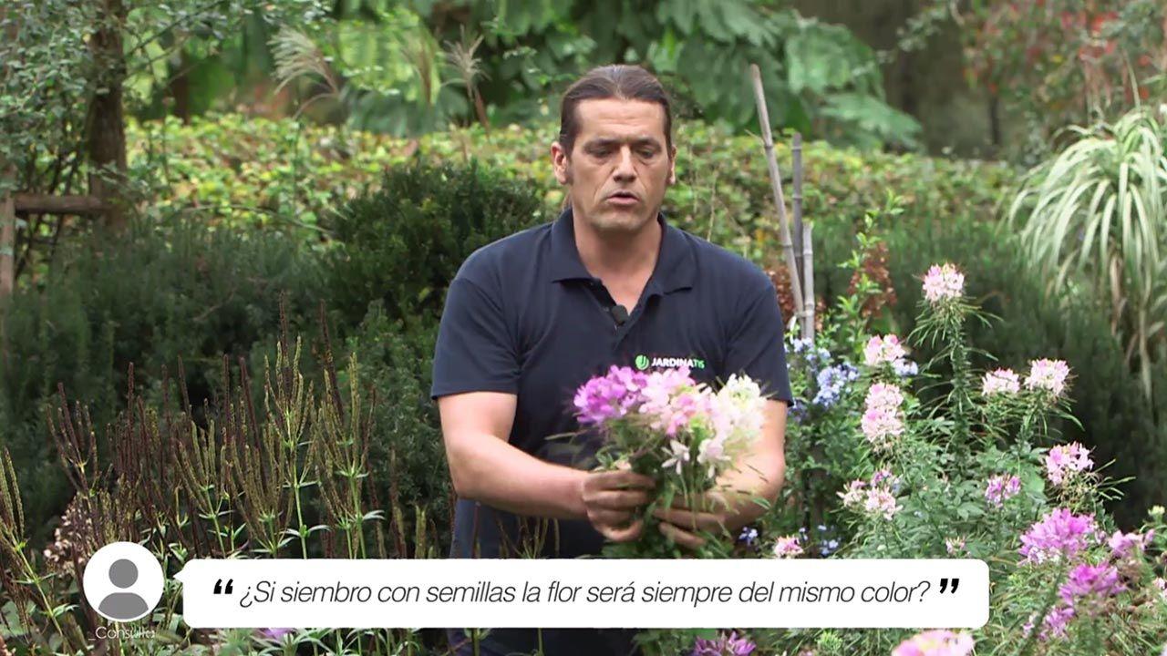 ¿Si siembro con semillas, la flor será siempre del mismo color?