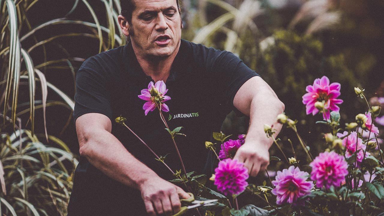 Flores de Dalias agotadas