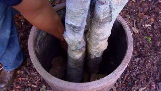 Cómo hacer un árbol navideño con troncos de abedul
