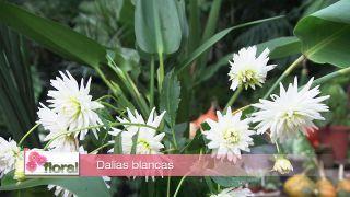 Composición floral con dalias