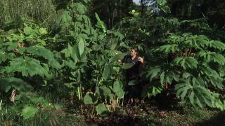 3 plantas de exterior con hojas singulares