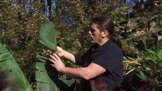 Proteger el Ensete ventricosum maurelii del frío