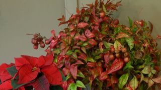 Arreglo floral con Nandina doméstica