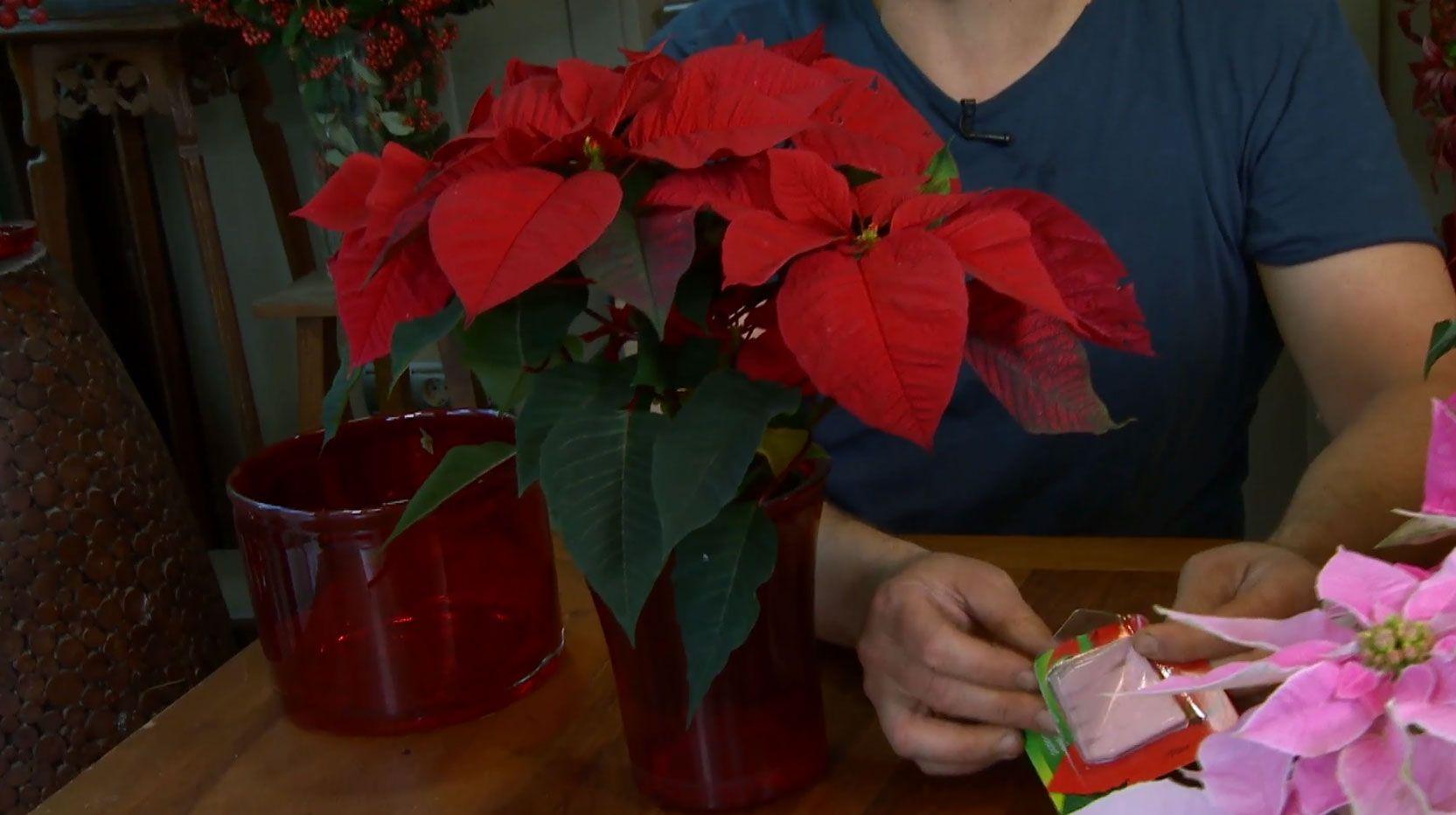 arreglo floral con flor de pascua