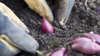 ¿Que se puede plantar en diciembre en la huerta?