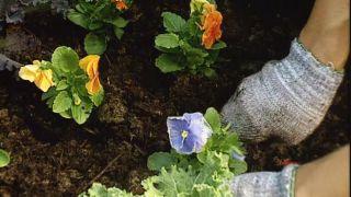 Parterre de flores de invierno