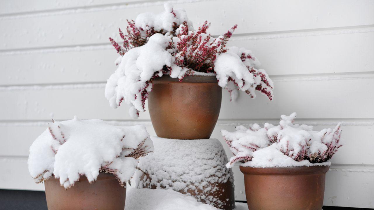 6 consejos para proteger las plantas de exterior durante el invierno