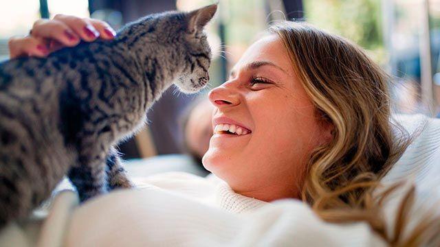 Gato amasando a su dueña