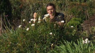 Características y resistencia de la rosa opalia
