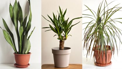 Plantas para decorar un hall sin luz natural