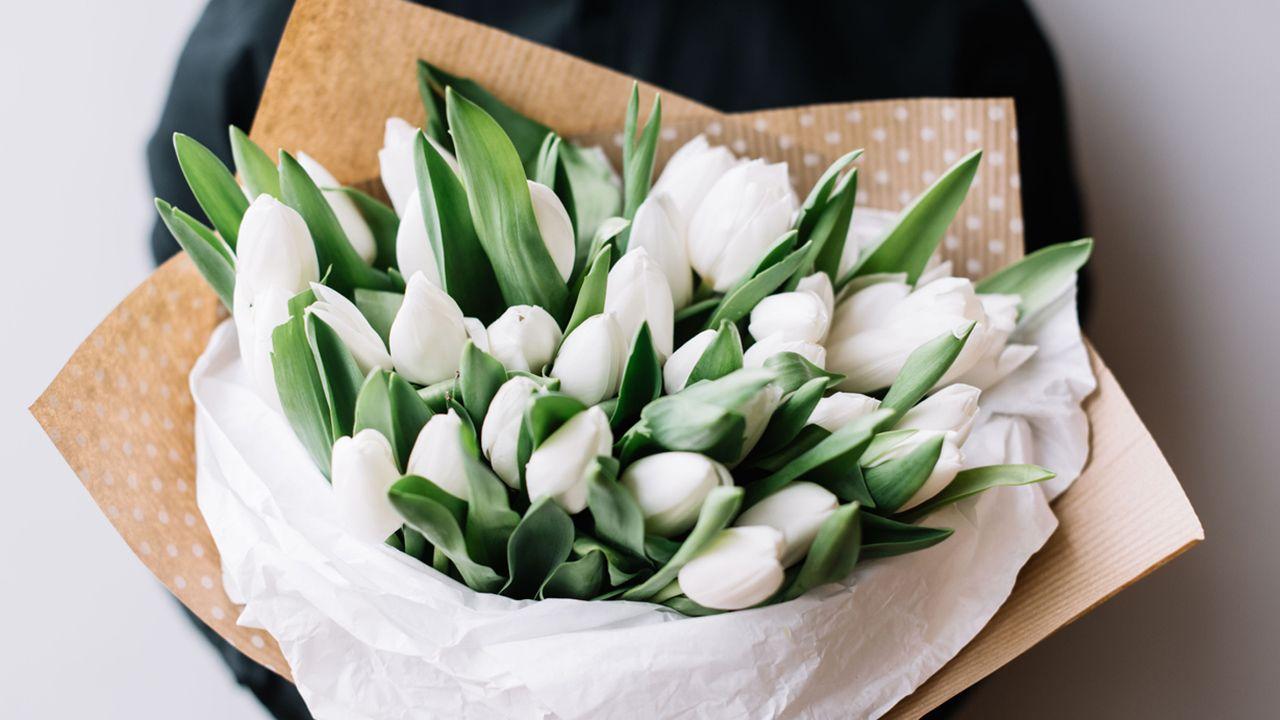 Regalar tulipán blanco