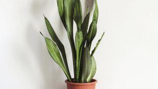 Plantas para decorar un hall sin luz natural
