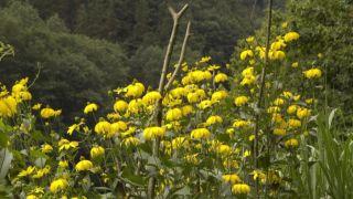 Reproducción de plantas vivaces