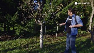 ¿Cómo proteger frutales en invierno?