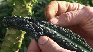 5 hortalizas de invierno en el jardín