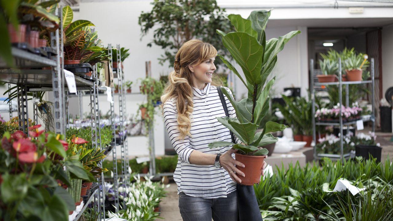 Cómo reducir el estrés de las plantas compradas en invernadero