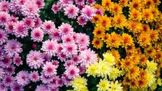 13 flores de invierno