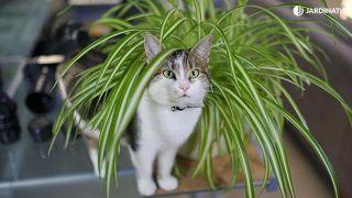Plantas seguras para los gatos: cinta