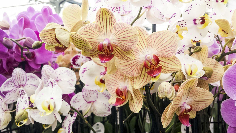 Ideas para ramos de flores en San Valentín