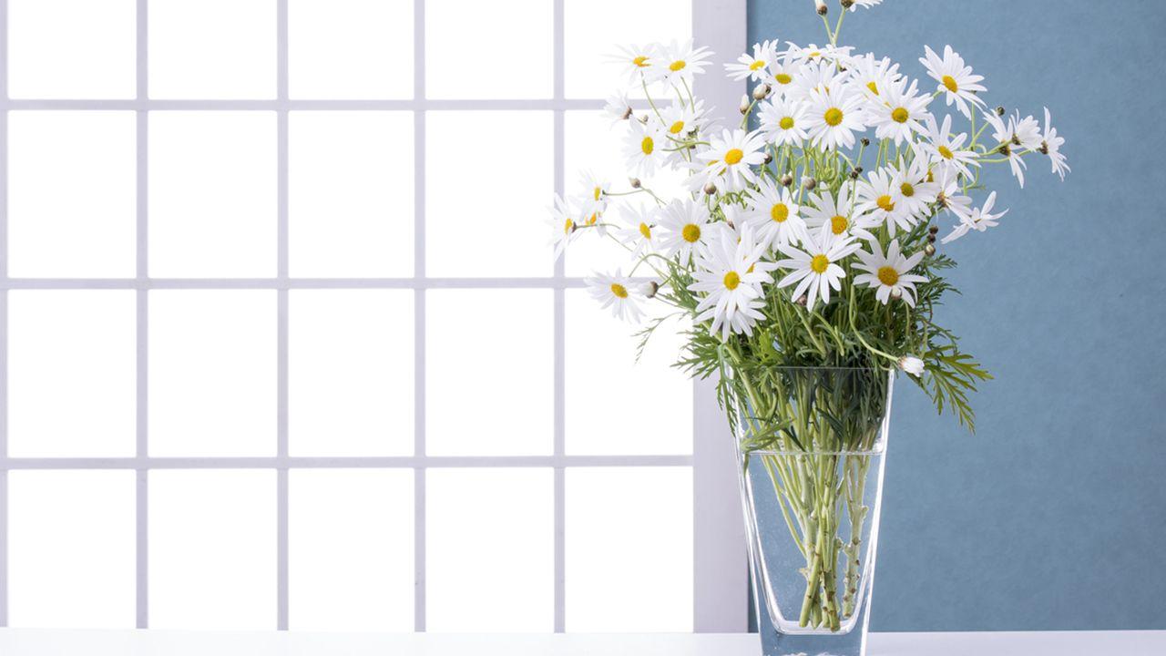 El significado del color de las flores y San Valentín