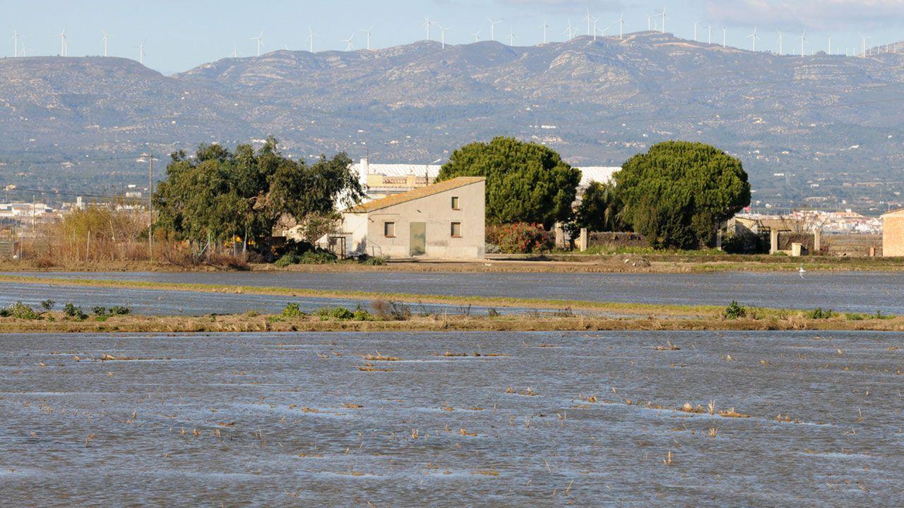 Cultivo del arroz en el Delta del Ebro.