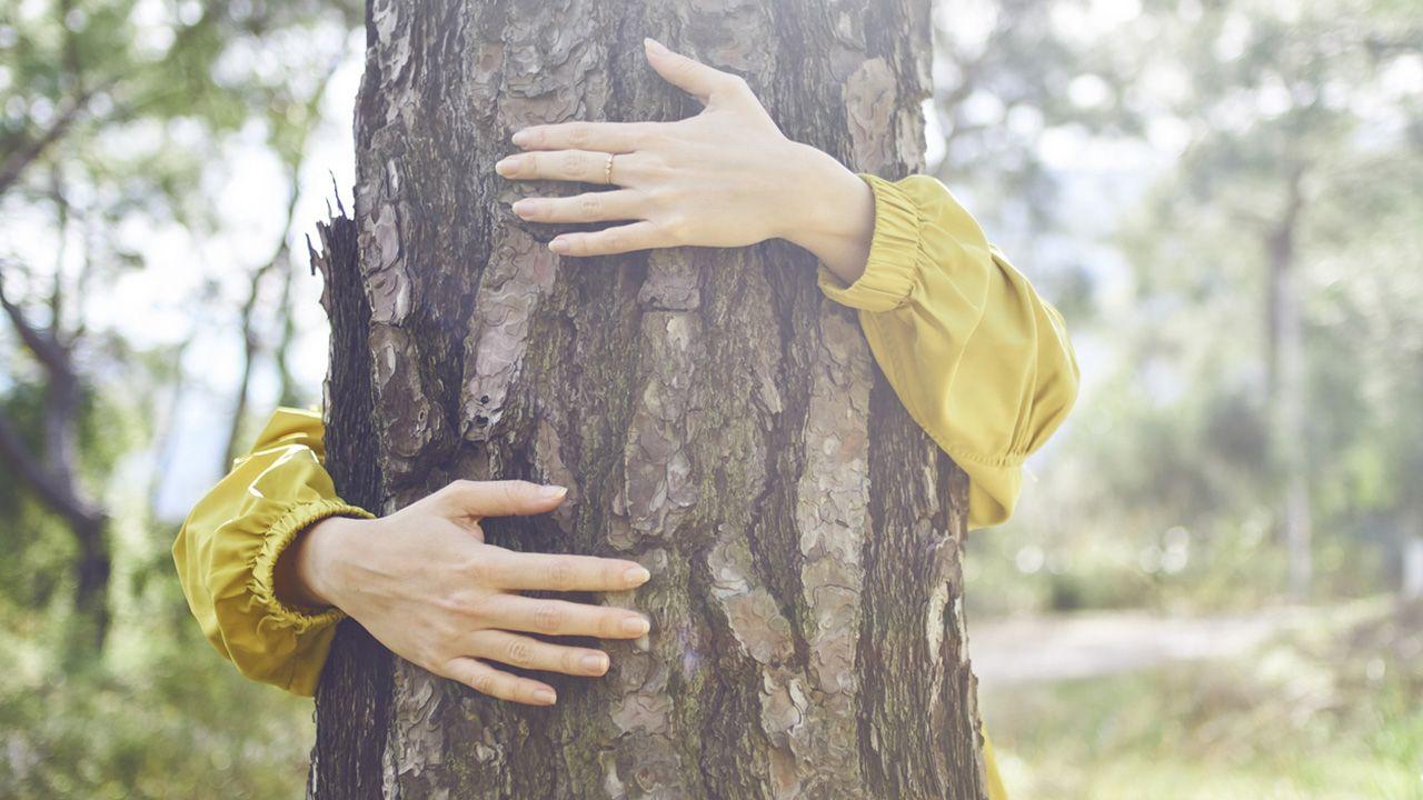 Qué no debemos hacer cuando vamos al bosque