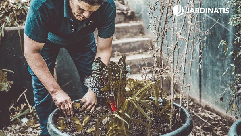 ¿Qué puedes cosechar en febrero en el huerto urbano?