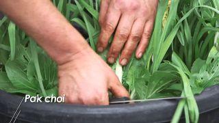 Cosecha de hortalizas de invierno