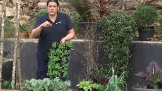 Cosecha de hortalizas de invierno y nueva plantación