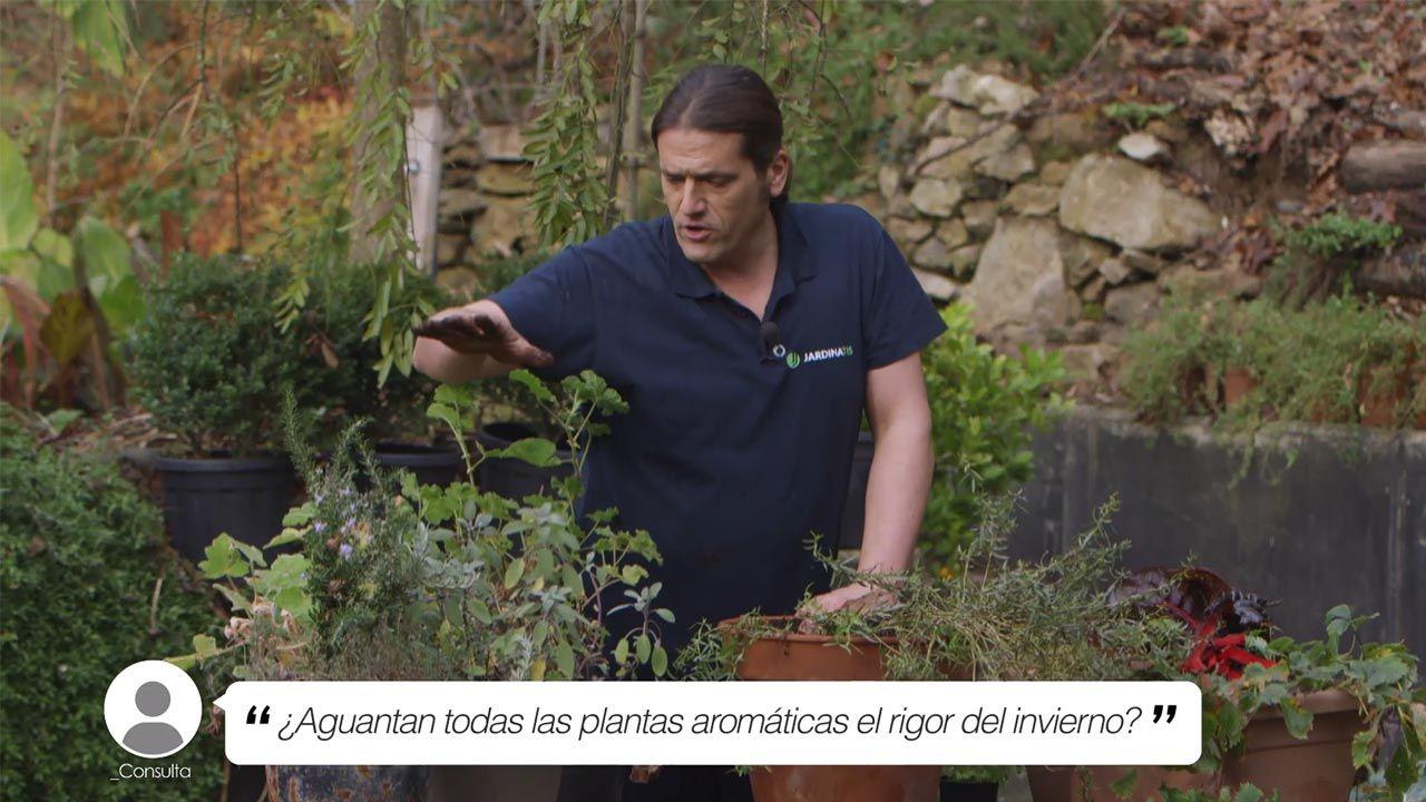 ¿Aguantan todas las plantas aromáticas el rigor el invierno?