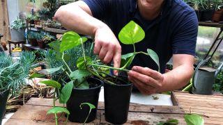 Cómo acodar una planta de poto en casa