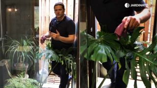 Limpiar las plantas de interior