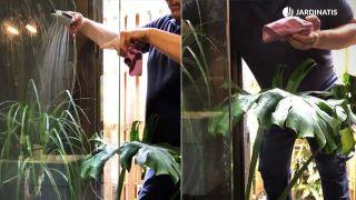 como-limpiar-plantas-interior