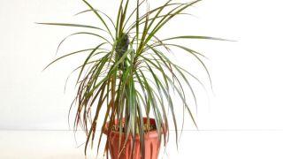 Plantas pequeñas para estancias pequeñas