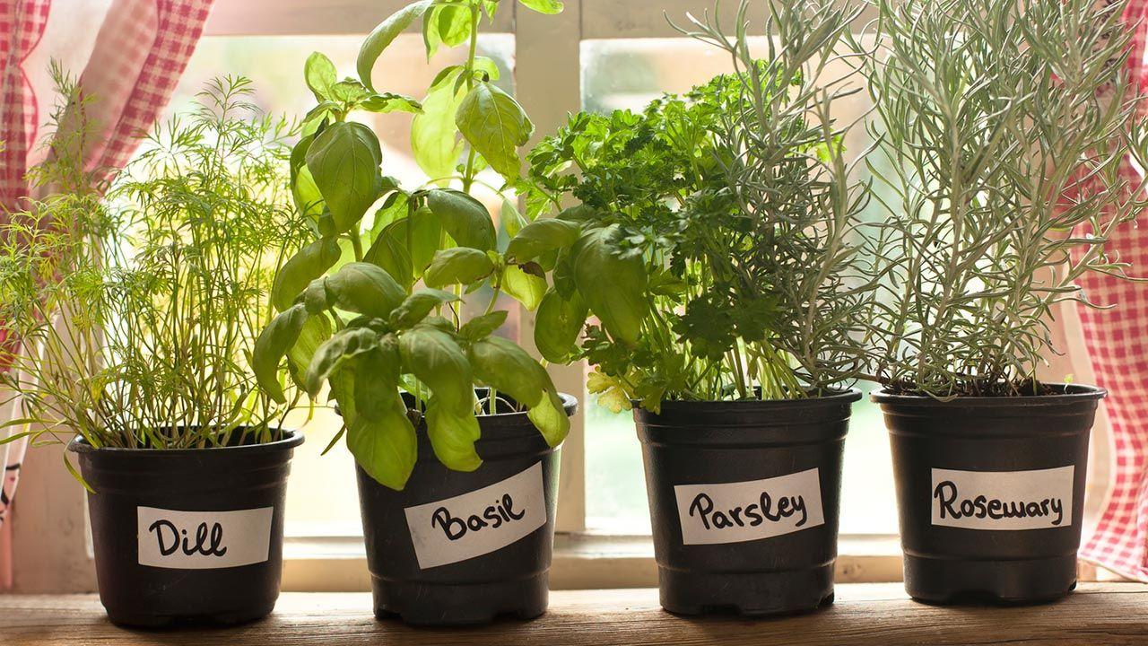 Tareas de jardinería en marzo