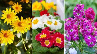 12 plantas que florecen a finales del invierno