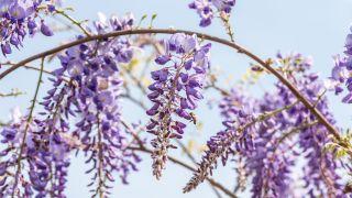 12 plantas con floración a finales de invierno