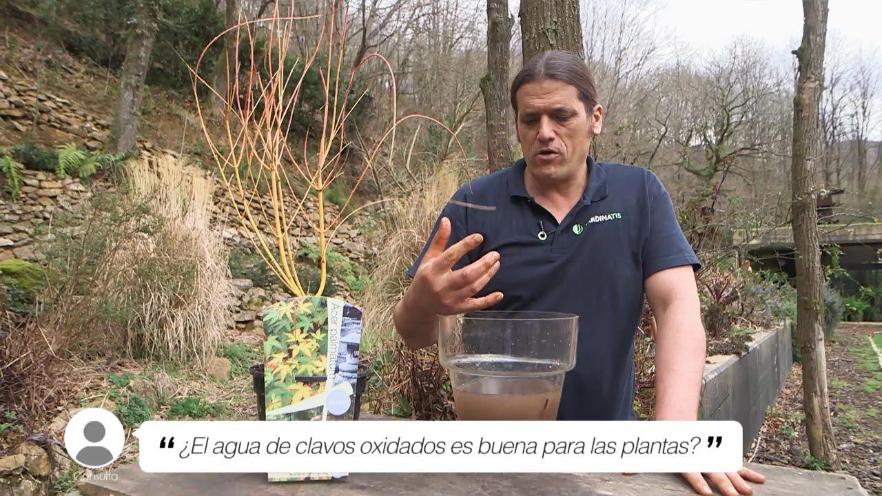 ¿El agua de clavos oxidados en buena para las plantas?