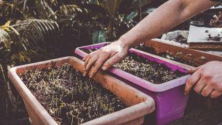 Claves para hacer un buen semillero