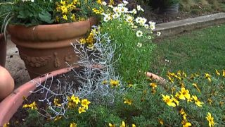 Flor de temporada en amarillo y blanco para primera y verano