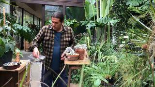 Cómo multiplicar plantas crasas por esqueje de hoja
